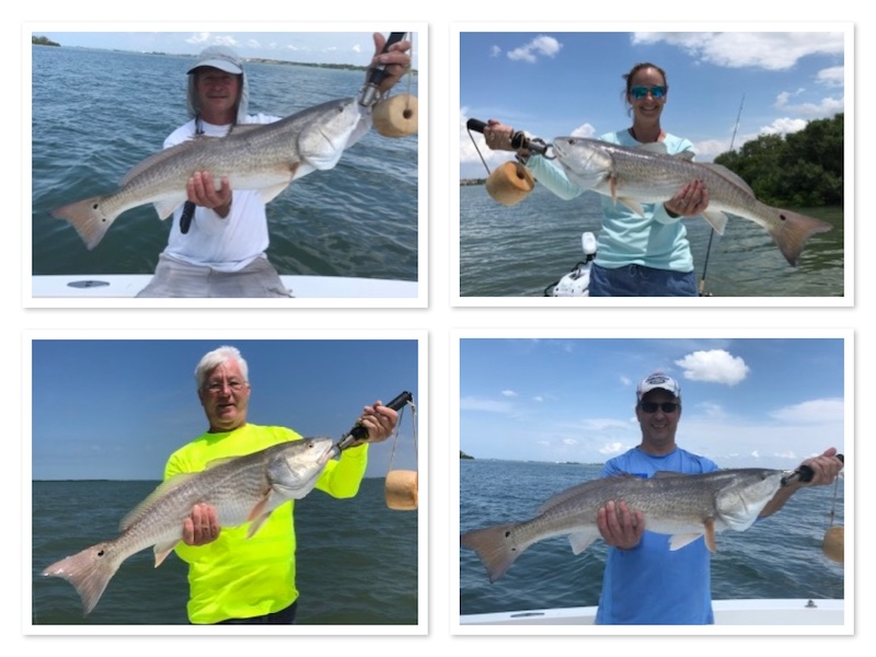 OverSlot redfish on Tampa Fishing Charter
