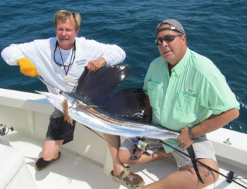 Sailfish in Tampa